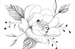 Gallïane Murmures – Paeonia